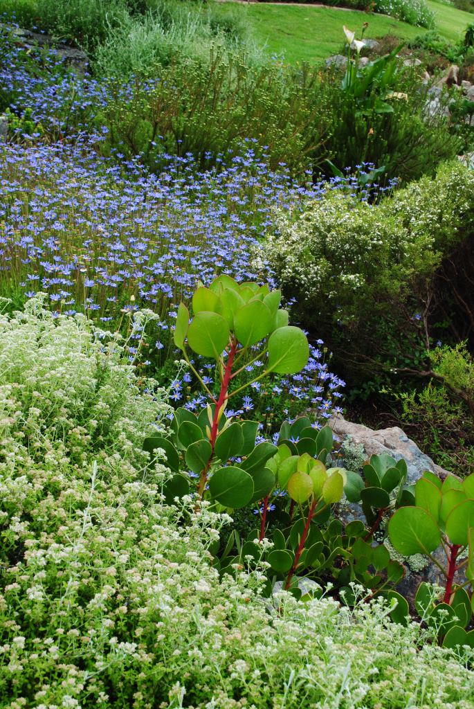 Kirstenbosch-2