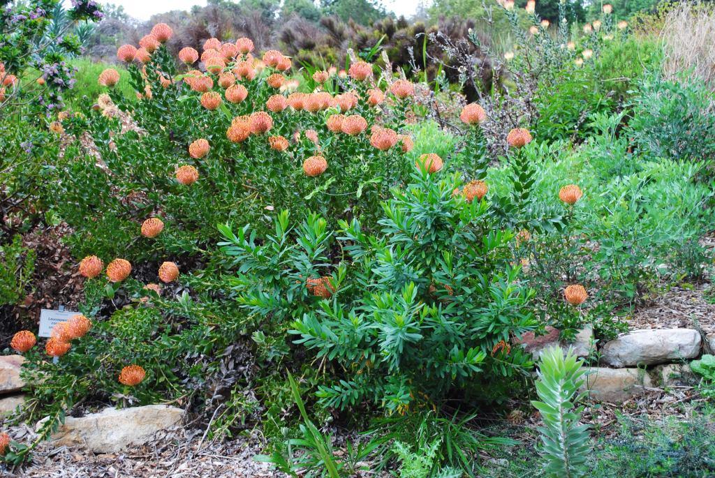 Kirstenbosch-4