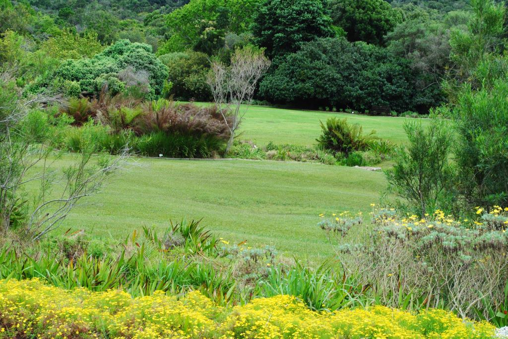 Kirstenbosch-6