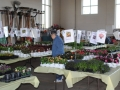 plants for sale 4 sm
