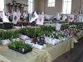 plants for sale sm