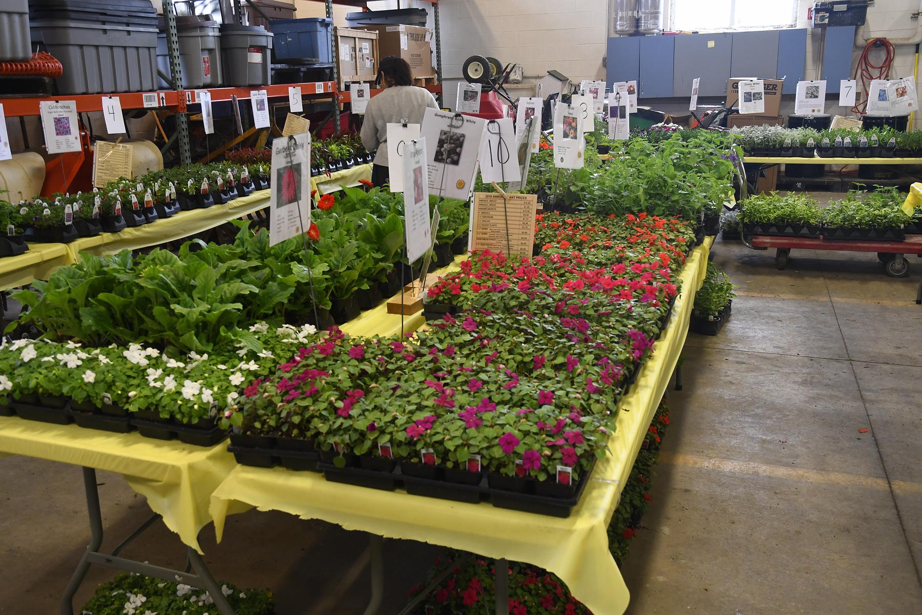 1_Plant-Sale_021