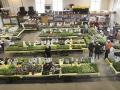 Plant-Sale_001