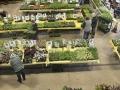 Plant-Sale_009
