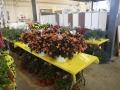 Plant-Sale_011