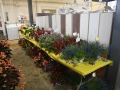 Plant-Sale_012