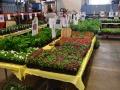 Plant-Sale_021