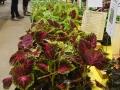 Plant-Sale_026