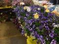 Plant-Sale_032
