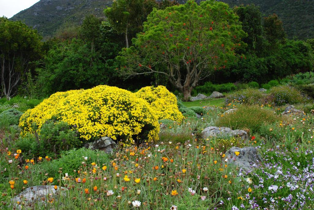 Kirstenbosch-3