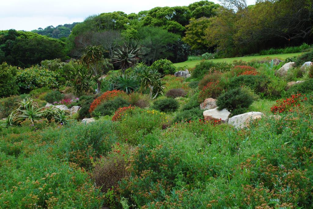 Kirstenbosch-5