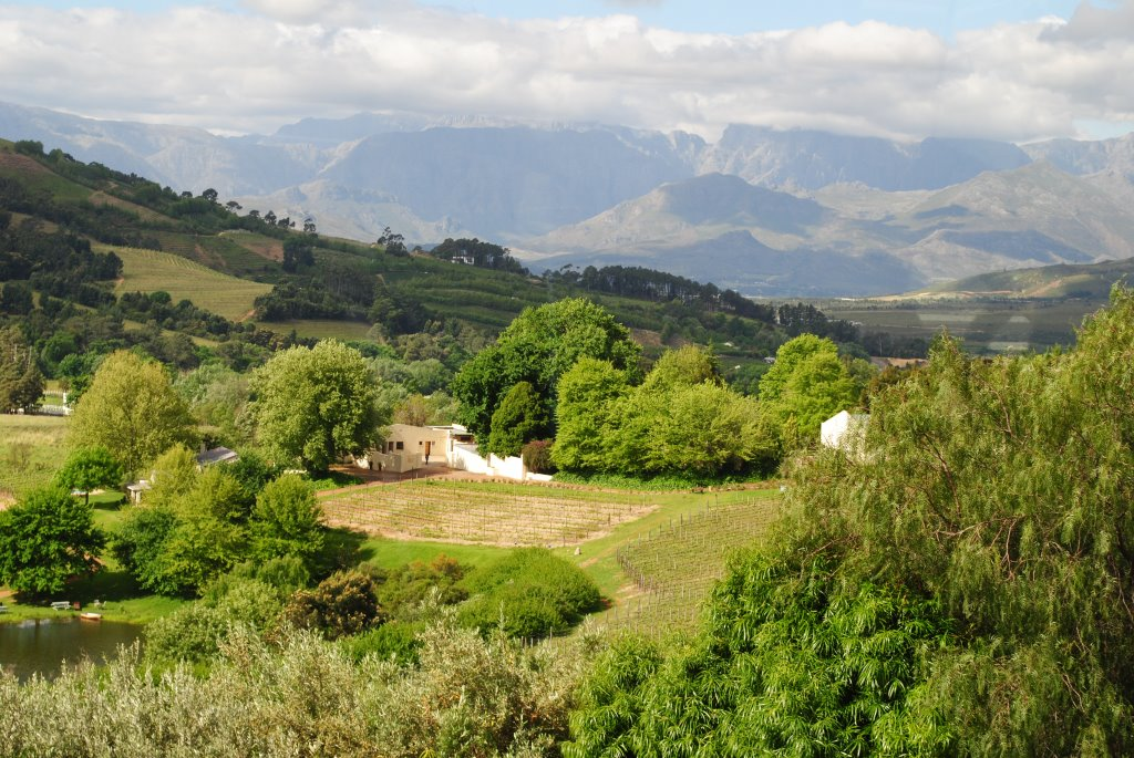 Stellenbosch-vineyards