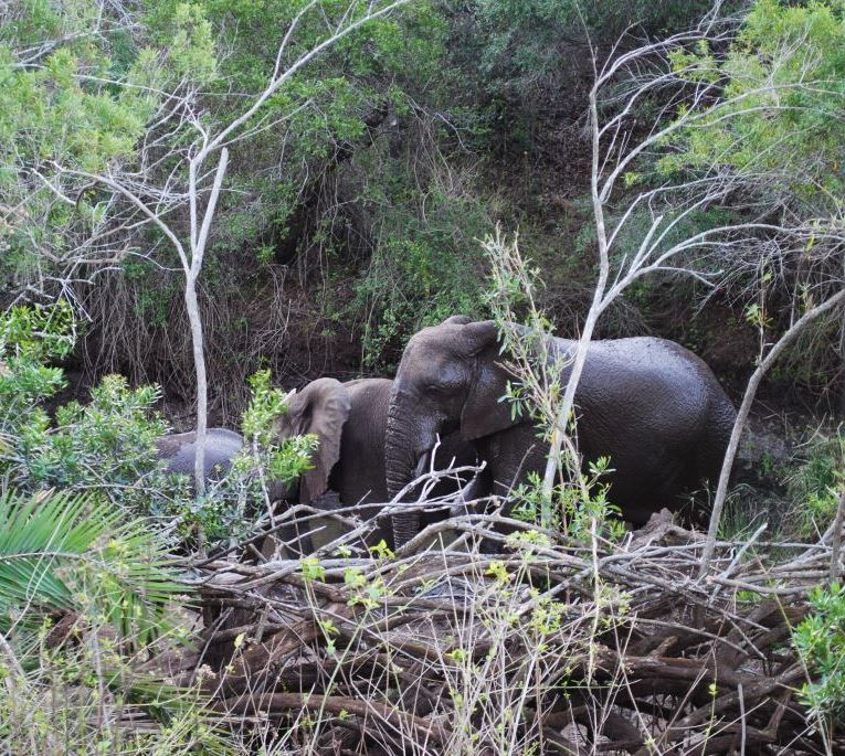 elephants-at-watering-hole