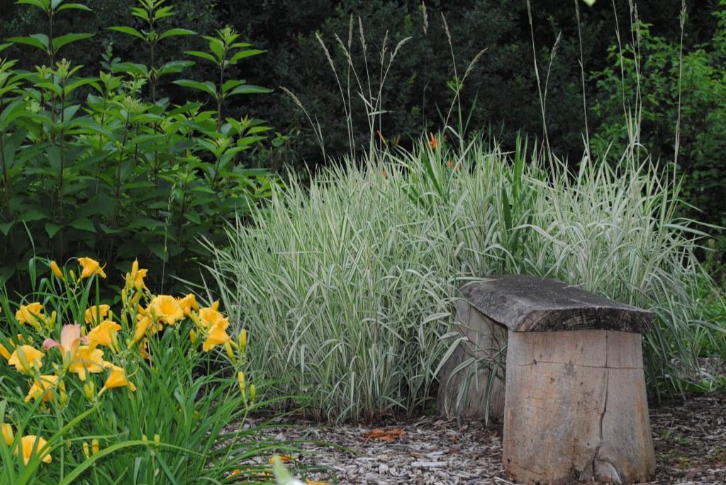 HMP garden 2-2013 sm