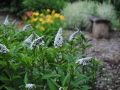 HMP garden 3-2013 sm