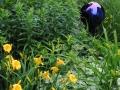 HMP garden 5-2013 sm