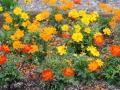 HMP garden 6-2013 sm