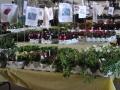 plants for sale 2 sm