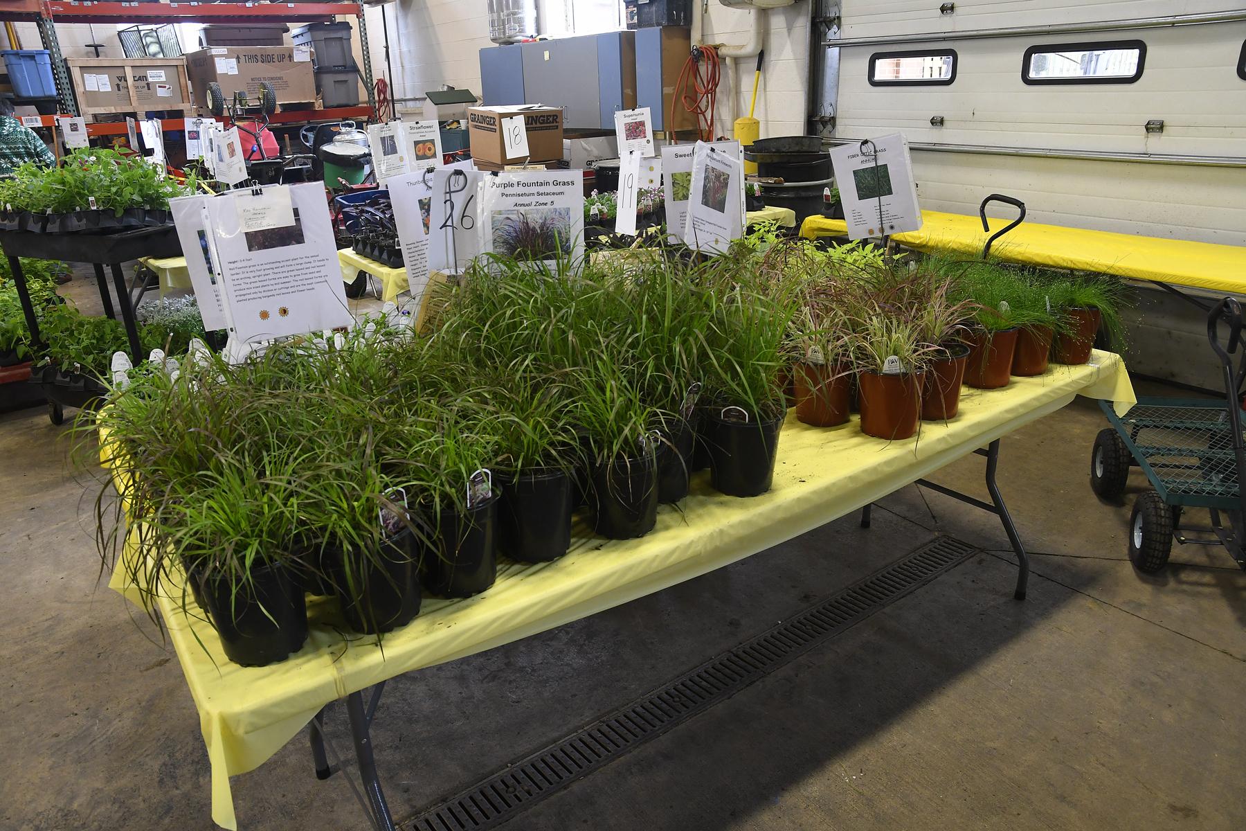 Plant-Sale_015
