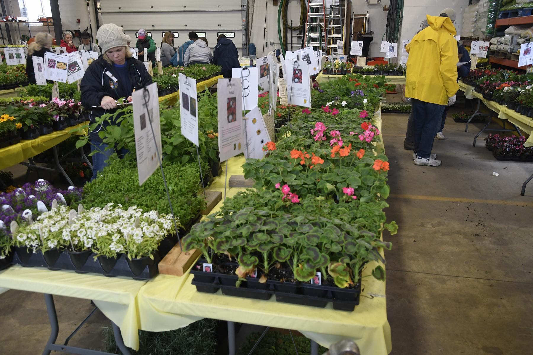 Plant-Sale_019