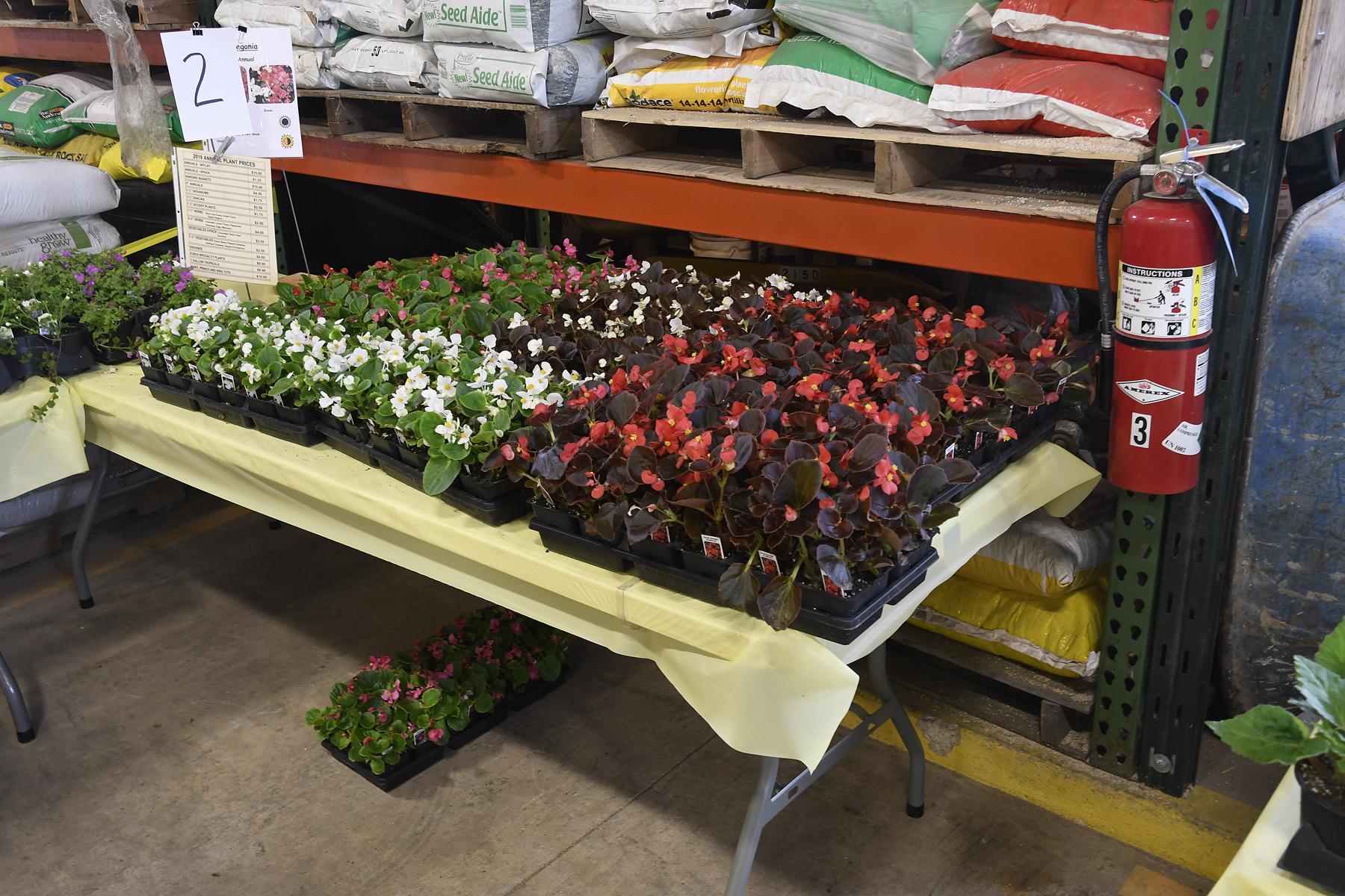 Plant-Sale_020