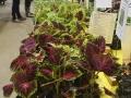 1_Plant-Sale_026