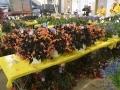 1_Plant-Sale_029