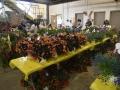 Plant-Sale_013