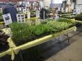 Plant-Sale_014