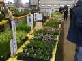 Plant-Sale_016