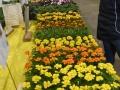 Plant-Sale_018