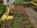Plant-Sale_022