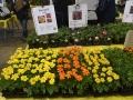 Plant-Sale_024