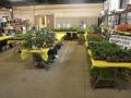 Plant-Sale_027