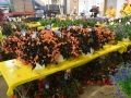 Plant-Sale_029