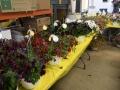 Plant-Sale_031