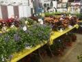 Plant-Sale_033