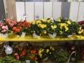 Plant-Sale_034